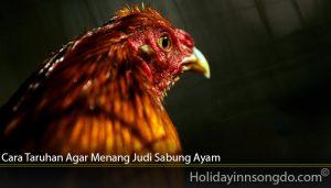 Cara Taruhan Agar Menang Judi Sabung Ayam