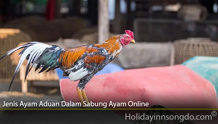 Jenis Ayam Aduan Dalam Sabung Ayam Online